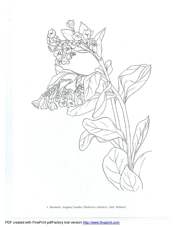 American Wildflowers Coloring Book Best Images About Embroidery On