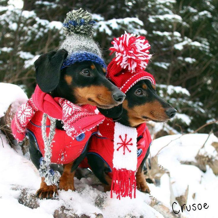 """""""We're always sportin' the latest winter wiener wear."""" ~ Crusoe"""""""