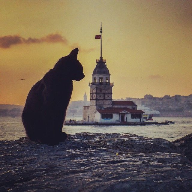 """Âh İstanbul! """"Bâzen sadece yorgun oluyor insan; Ne küs, ne yalnız, ne de âşık…"""" Bil istedim."""