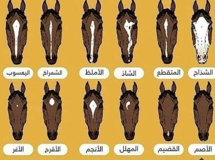 Share Image Learning Arabic Arabic Language Arabic Horse