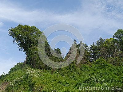 Green hills, bush and trees, Caucasus Nature Reserve, Russia, summer time