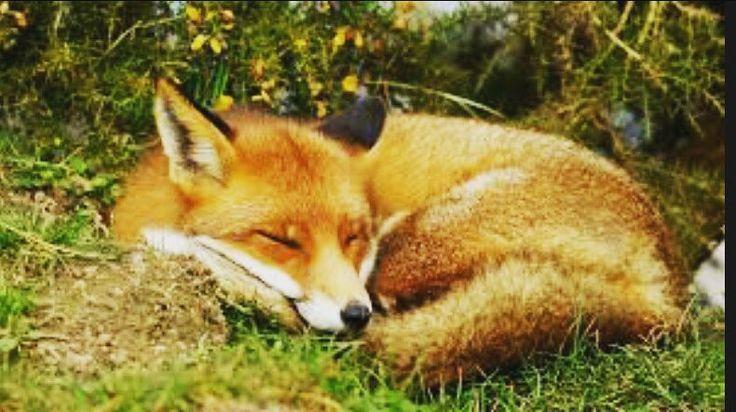 Buenas noches compañeros!! #caza_spain_ #cazadoresdeespaña #caza #chasse #hunt#cazadeacuaticas #jaraysedal #patos #caza #chasse #hunt #navajero #jabali #guarro #macareno #sialacaza #vivalacaza #caza #chasse #hunt #navajero #jabali #guarro #macareno #sialacaza #vivalacaza #caza #chasse #hunt #navajero #jabali #guarro #macareno #sialacaza #vivalacaza #reclamo #perdiz #caza_spain_ #cazaconreclamo #sialacaza #patirroja #videodecaza #videosdecaza #chasse #hunt #caza #caza_spain…