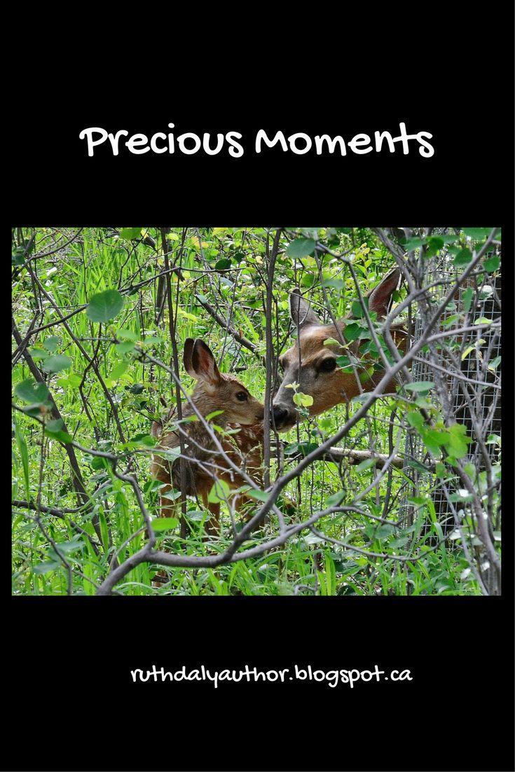 Precious moments in nature