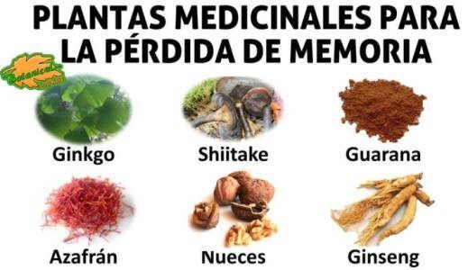 Remedios para mejorar la memoria con plantas alimentos y remedios
