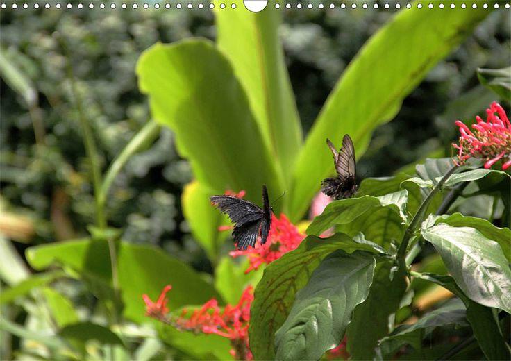 """Tier-Posterbuch """"Schmetterlinge der Tropen"""", Seite 3"""