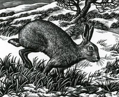 Ambling Hare by Howard Phipps