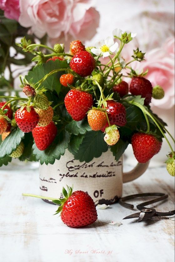 Strawberries || mysweetworld