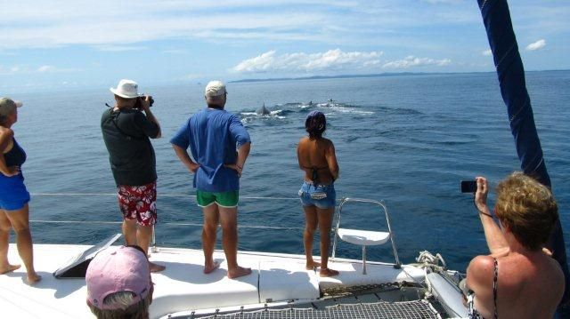 Humpback whale watching and Dolphin tours from Panama City and Contadora Island in the Pearl Islands, Panama.