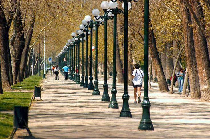 Mucha gente visita forestal parque. La parque es hermoso y grande.