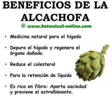 beneficios de la alcachofa propiedades medicinales para la salud