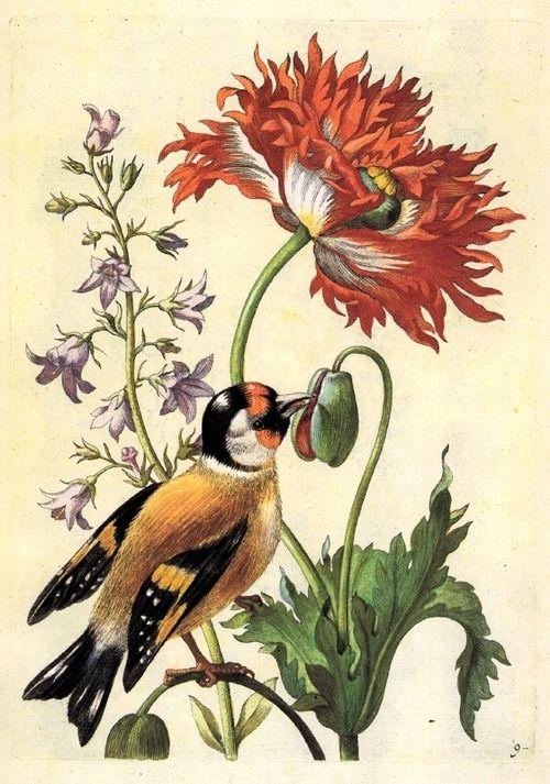 bird and poppy flower