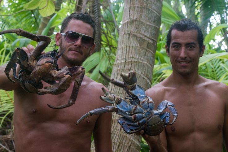10 best Crustacean images on Pinterest | Crabs, Animaux ...