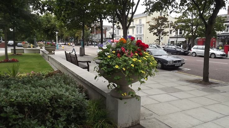 Urns planted up 2013 looked amazing - love the trailing Black Eyed Susan. Thank you Sooty's Plants for your generosity