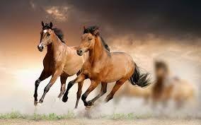 Afbeeldingsresultaat voor horses