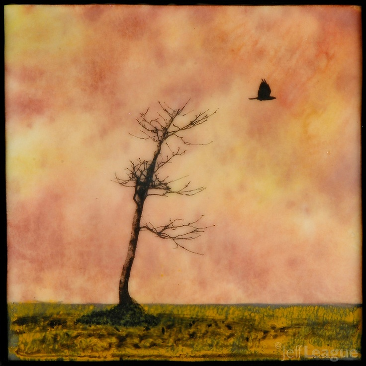Mixed media photography and encaustic painting of bare tree with crow flying in autumn sunset sky