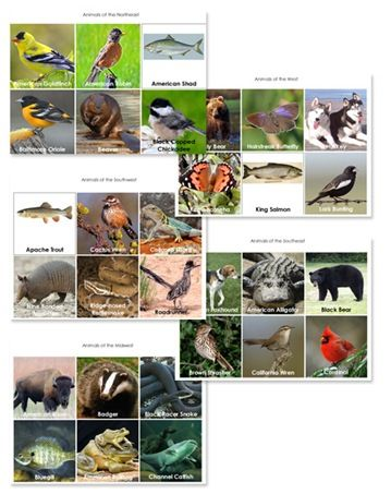 A wonderful resource to add to State Studies next year. Free printable animals cards of each state.