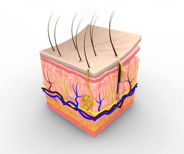 The good news is scientists are a step closer to being able to cure hair loss. Researchers in Japan have managed to grow skin along with hair follicles in a laboratory setting.