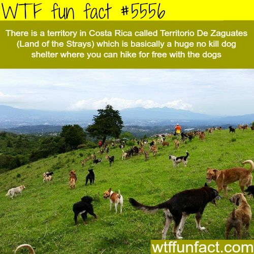 : Costa Ricas Land of the Strays - WTF fun facts | April 1 2016 at 04:37AM | http://www.letstfact.com