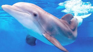 Clearwater Marine Aquarium Adults = $22 Children = $17  Teachers = FREE  -$2 coupon online  $70 / 5 people