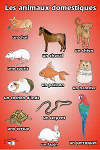 Poster - Les animaux domestiques - Little Linguist