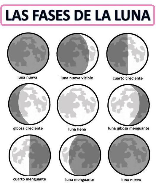 Resultado de imagen para fases de la luna para colorear