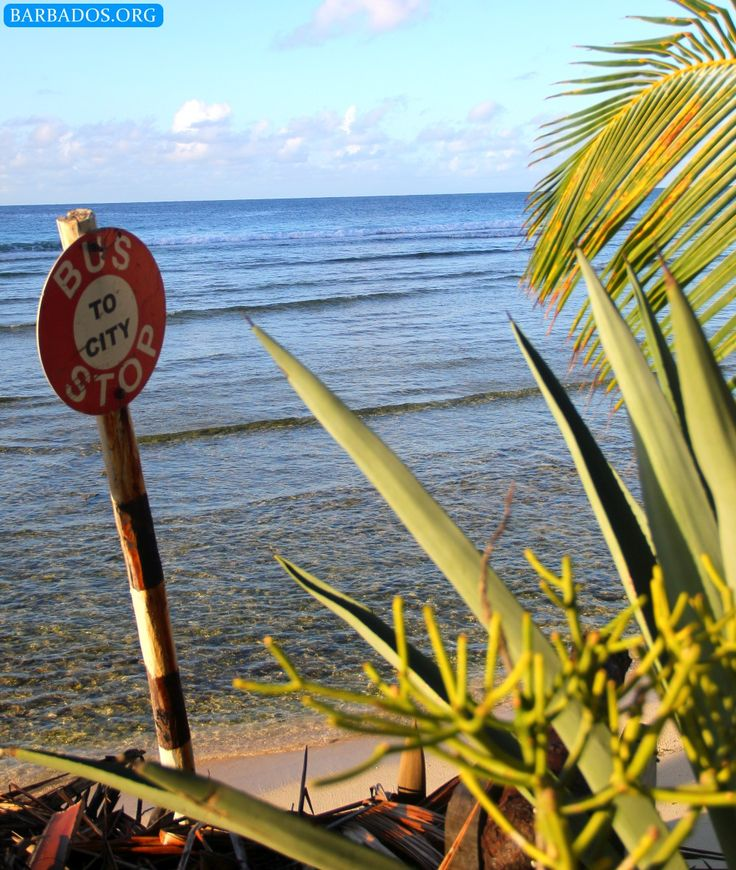 Barbados bus stop with 59 best