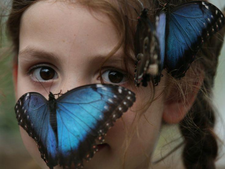 Un'esposizione temporanea nel museo di storia naturale di Londra ospita una collezione di farfalle tropicali. A visitarla, in anteprima, sono stati alcuni giovani studenti che si sono divertiti a giocare con i colorati insetti