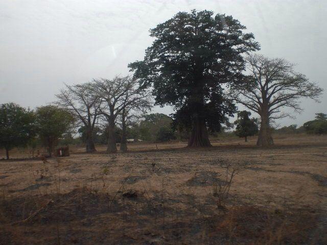 Kanilai - Gambia