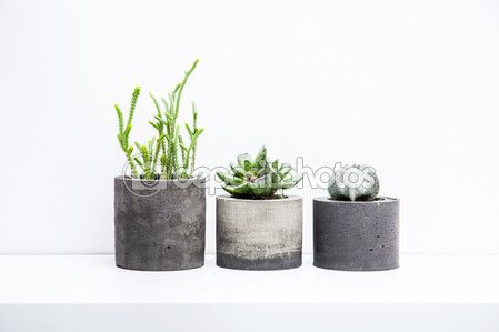 Succulents and cactus in concrete pots. Scandinavian hipster room interior — Stock Image #104197240