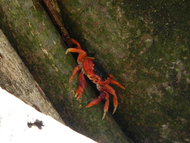 Les ptits crabes de la forêt