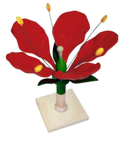 8 Best 3D Flower Model Images On Pinterest