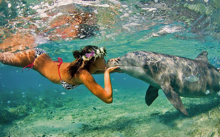 Az első és legfontosabb, hogy delfinparkokban is szoktak meghirdetni úszást – ezeknek a parkoknak egy része sajnos nem úgy tartja az állatokat, ahogyan azt kellene, ezért inkább olyan helyet válasszunk, ahol a természetes környezetében úszkálhatunk a delfinekkel.   #delfin terápia #delfinekkel úszás #delfinekkel úszni