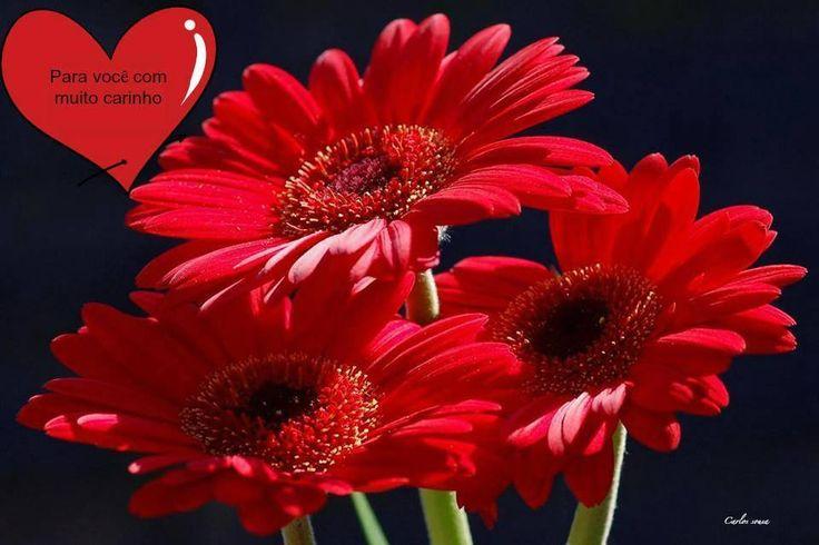 Missão cumprida 212 vezes eu te amo Emoticon heart Emoticon heart   Na verdade eu te amo 212 milhoes de vezes além do infinito vida minha <3  <3