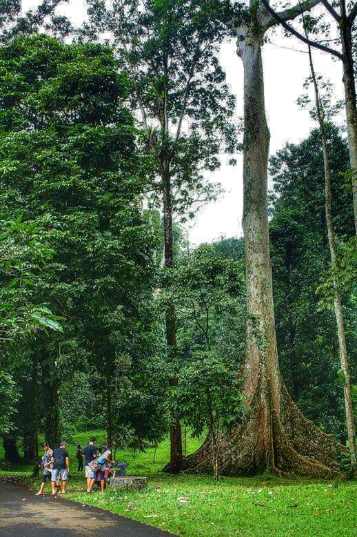 Botanical Garden, Bogor, West Java, Indonesia