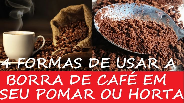 4 formas de usar a Borra de Café  em seu Pomar ou Horta!
