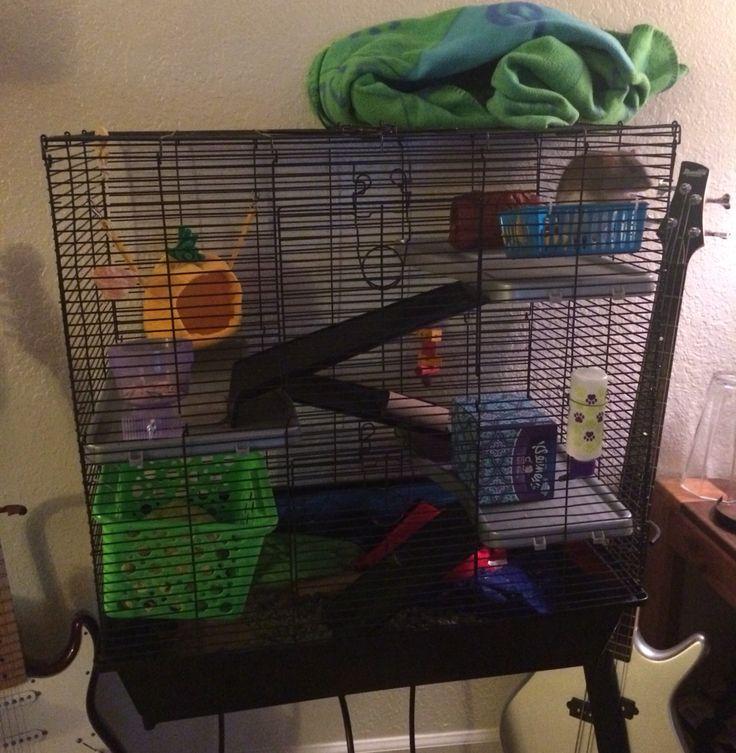 509 best images about secret agent rats on pinterest hamsters guinea pigs and rat cage - Hamster agent secret ...