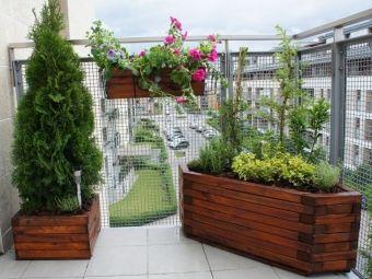 Ogród na balkonie (aranżacja balkonu i zdjęcia: Studio Atamaris)