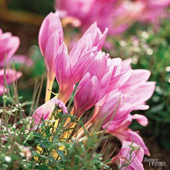 65 Best Perennial Sun Garden Plants Images On Pinterest