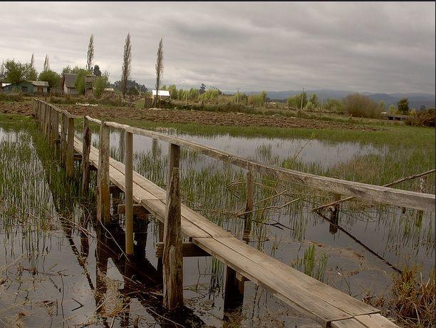 Puente Peatonal.Pta Carampangue Arauco