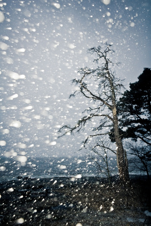 Lumisade (snowfall), Helsinki - This photo is great, but it also tells why I do not really like living in Finland, especially the southern coast.