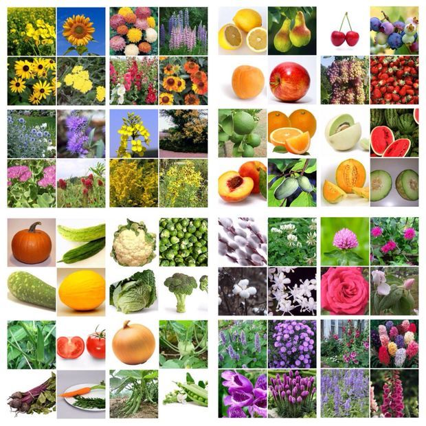 Picture of How to plan three seasons of bee friendly plants