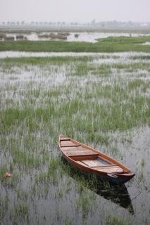 Paddy Fields, Hoi An, Vietnam