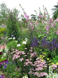 Ein Blumenbeet im Bauerngarten-Stil mit Steppensalbei, Schmuckkörbchen, Schafgarbe, Stockrose, Buschmalve