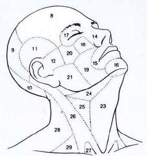 Face, cabeça e pescoço - regiões anatómicas - Portal da Codificação Clínica e dos GDH