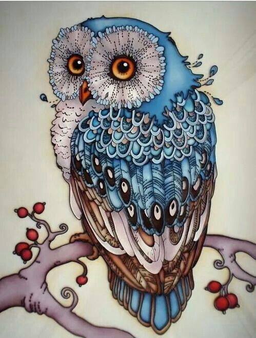 Owl in colored pencils. Shadows are amazing!