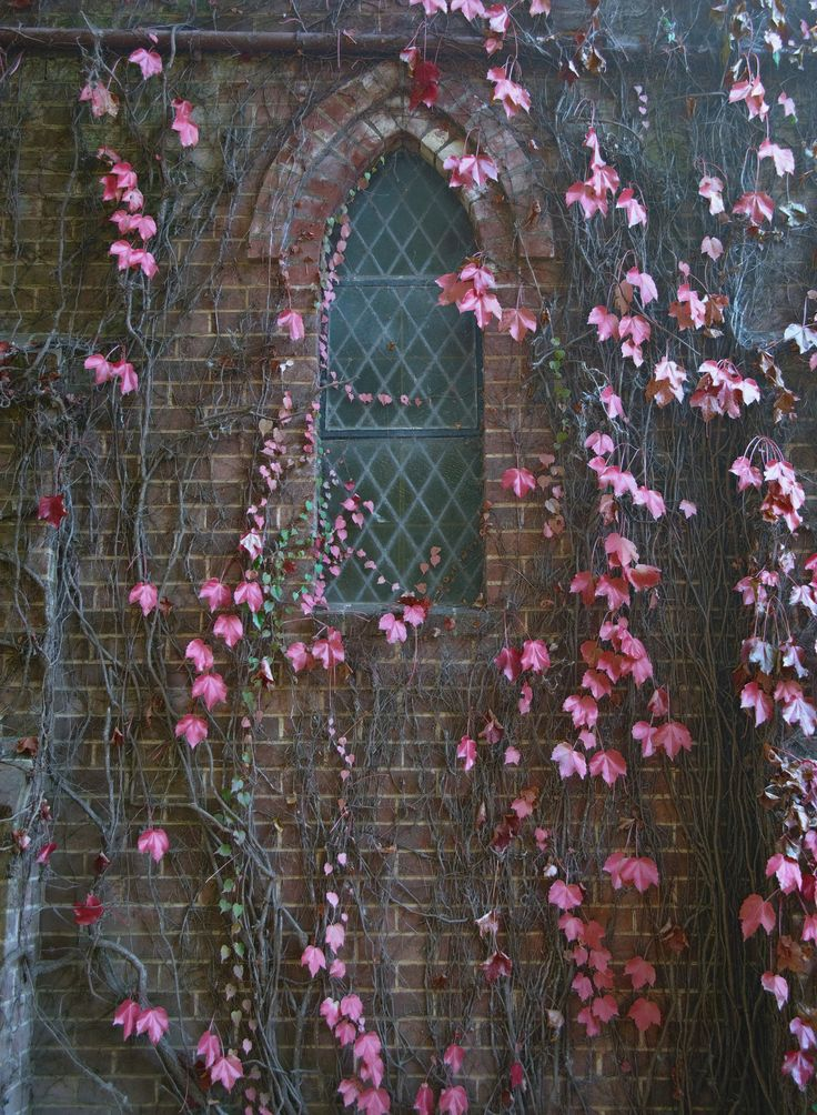 red leaves and vines on the church wall - http://www.myfreetextures.com/red-leaves-vines-church-wall/