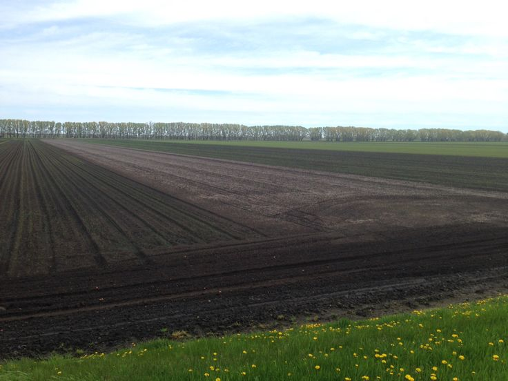 The fields of Leamington Ontario.  Right outside of point peele national park