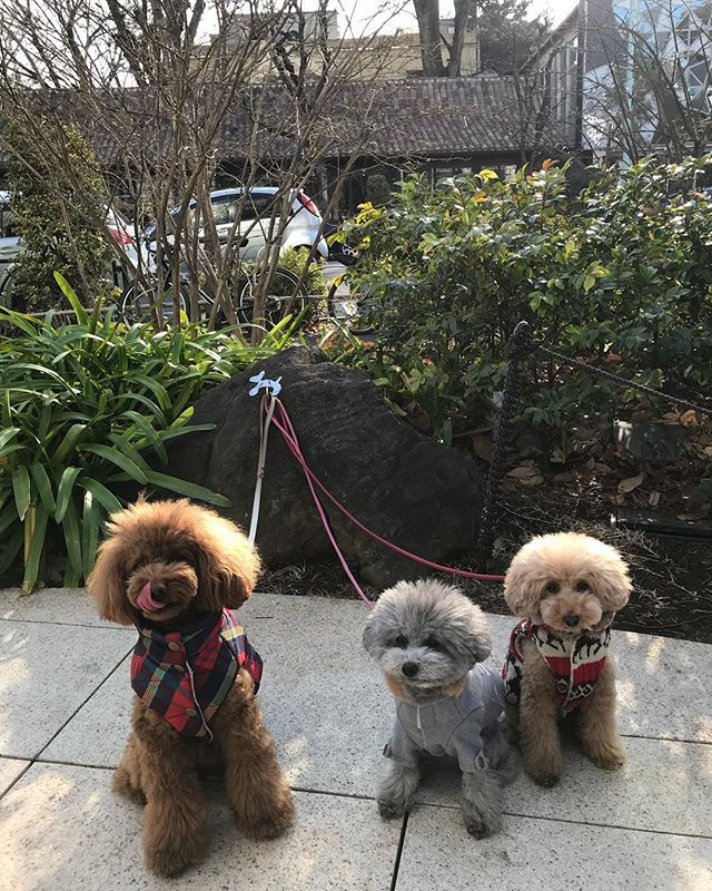 ニューヨークでは犬もファッション 冬になると多くの犬が可愛い服を来て街を歩く姿をみることができます 犬 ニューヨーク ファッション 服 ワンちゃん 散歩 ペット Dogs Animals New York