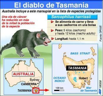 Diablo De Tasmania Num3