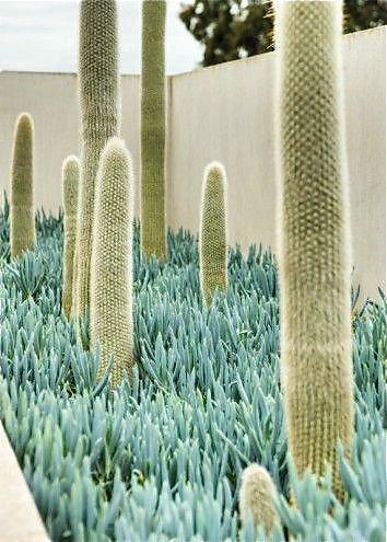 Free Your Wild :: Botanical Beauty :: Plants :: Cacti :: Garden Decor :: See more Untamed Nature @untamedorganica